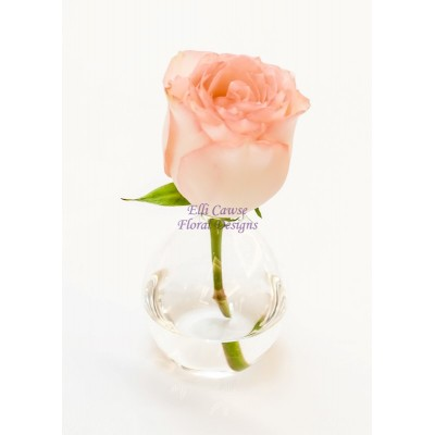 Dolce Vita Rose in The White Company Vase