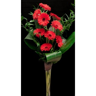 Gerbera Hand Tied Design